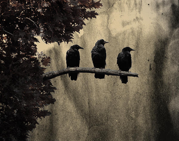 three-ravens-gothic-and-crows-art-photography_original
