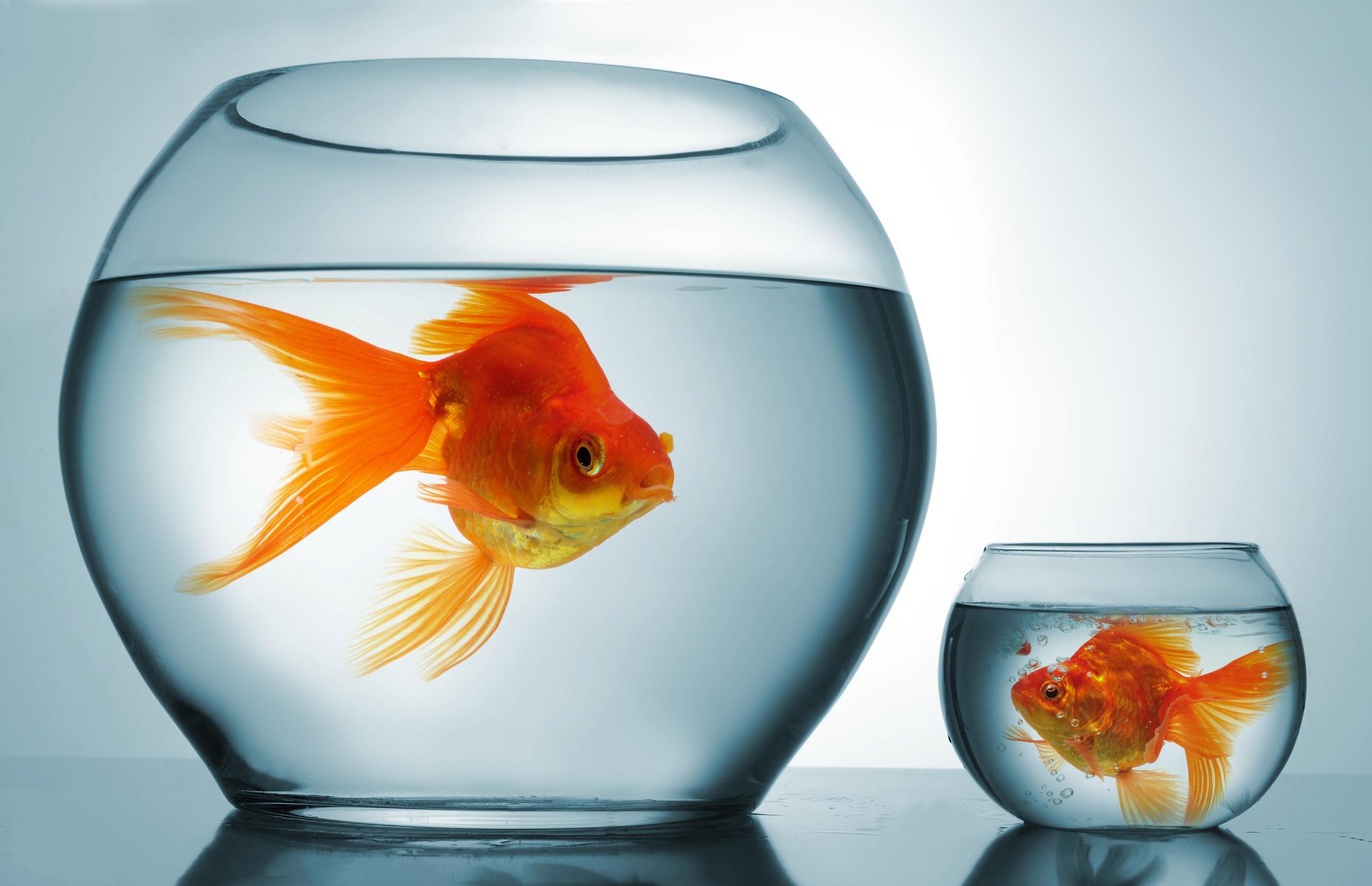aziende grandi vs aziende piccole