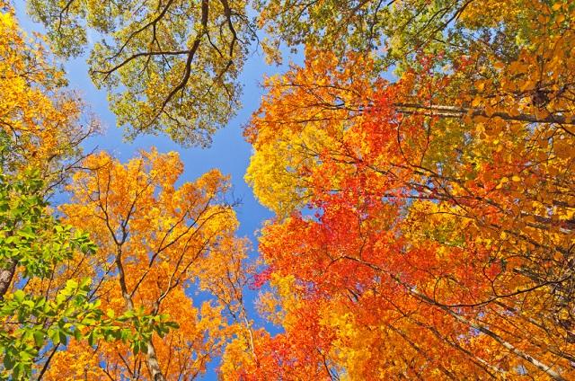 asset allocation adviseonly ottobre 2015