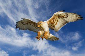 Trump caccia l'ennesima colomba (Tillerson) e la rimpiazza con l'ennesimo falco (Pompeo). Prossima settimana si riunisce la Fed, ma l'inflazione non giustifica l'ansia che c'è nell'aria.