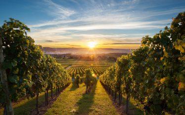 l boom delle aziende vinicole in Borsa